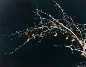 goldene Zweige 10