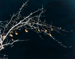 goldene Zweige 2
