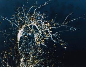 goldene Zweige 5