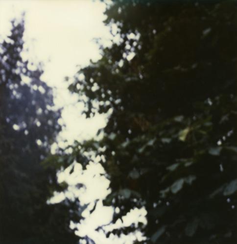 16-terraferma-II