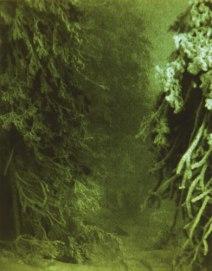 2-Plant-kingdom