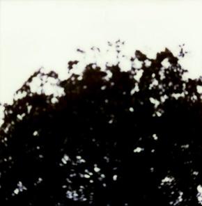 2-terraferma-II